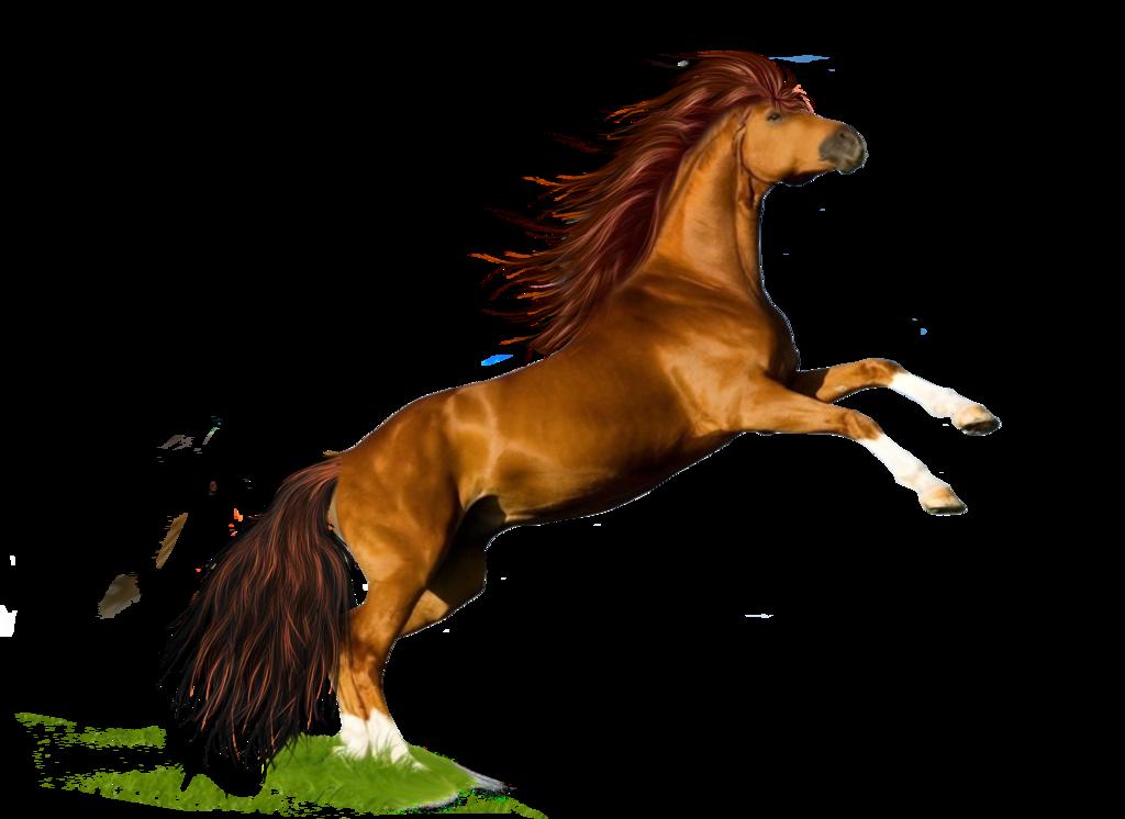 Сделать открытки с лошадьми черных