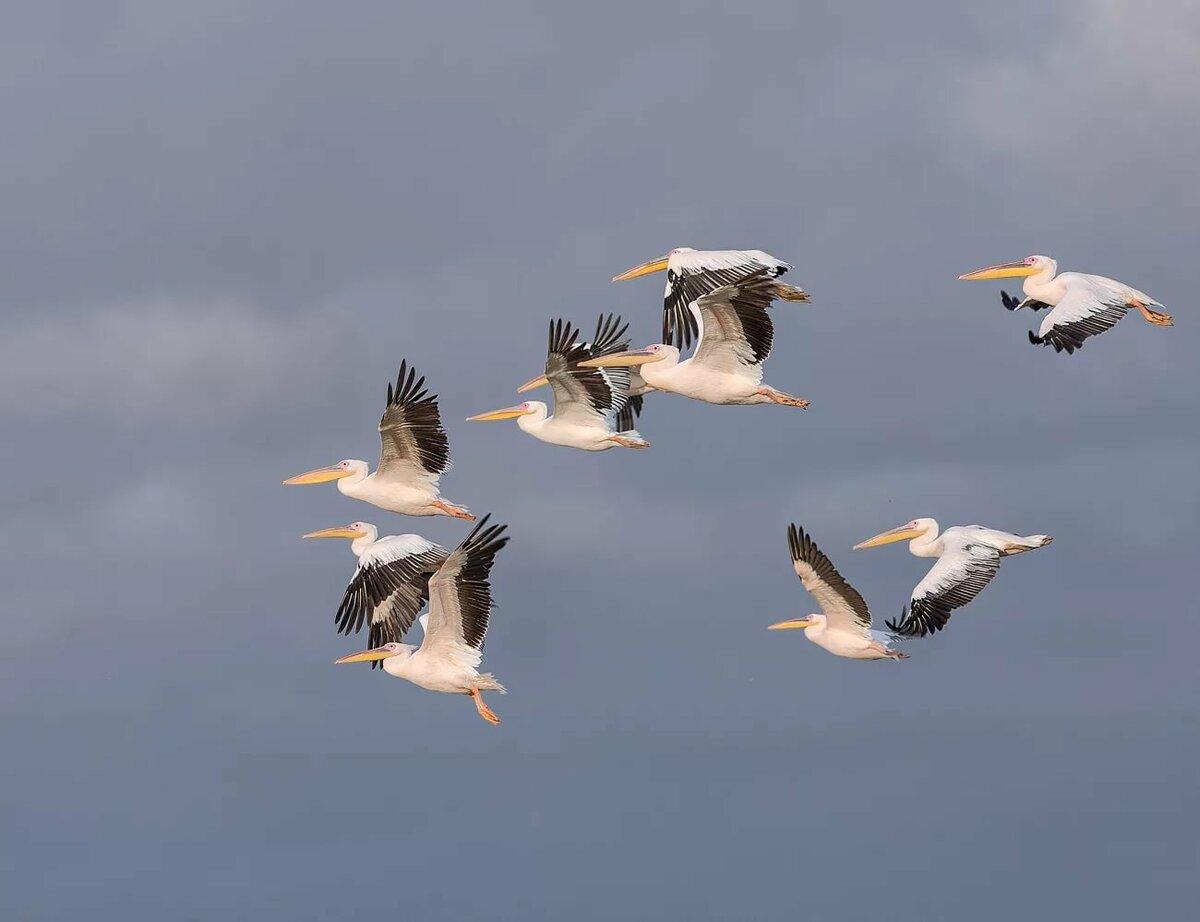 виды перелетающих птиц фото радостную весть