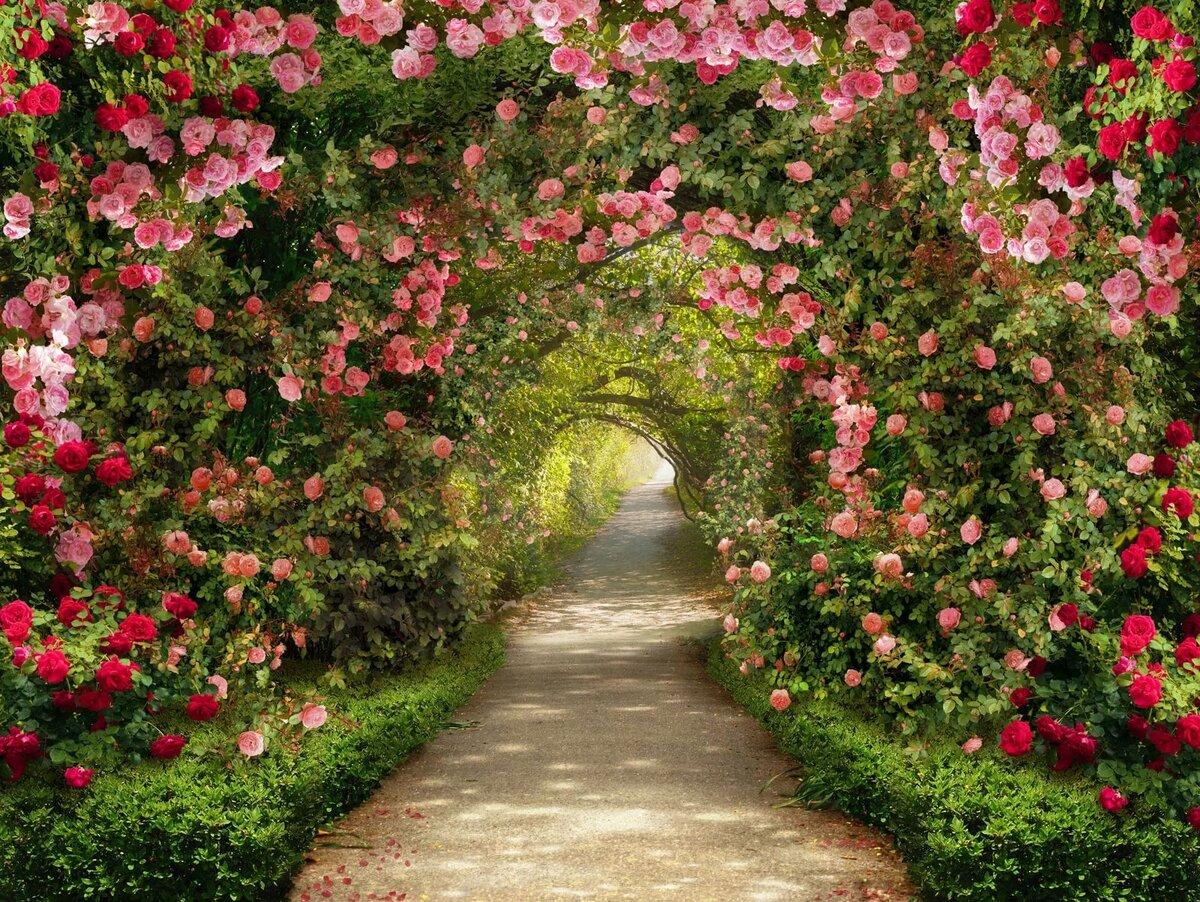 Картинки сада с цветами и деревьями, для девочек