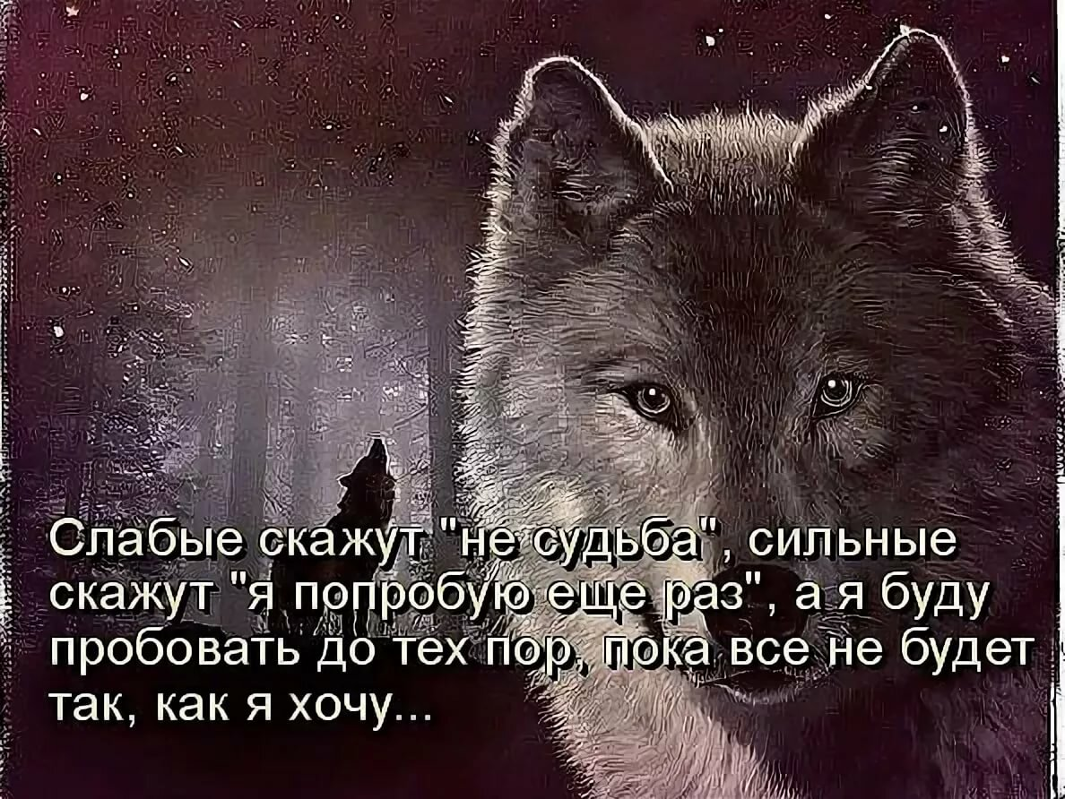 Надпись волк картинка