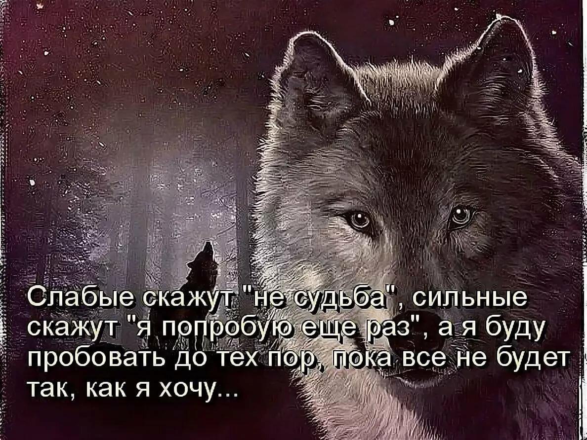 иначе картинки с фразами со волки смыслом о жизни и любви данных компаниях