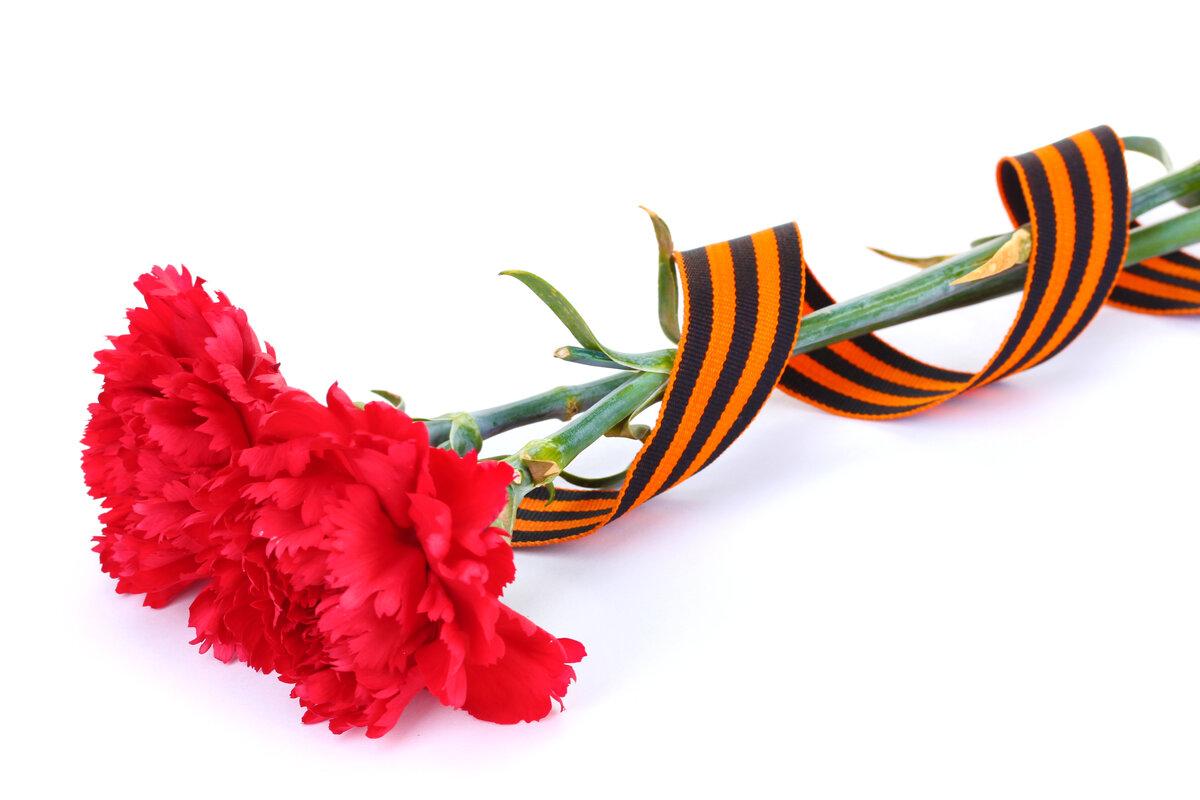 Цветы с георгиевской лентой картинки большие