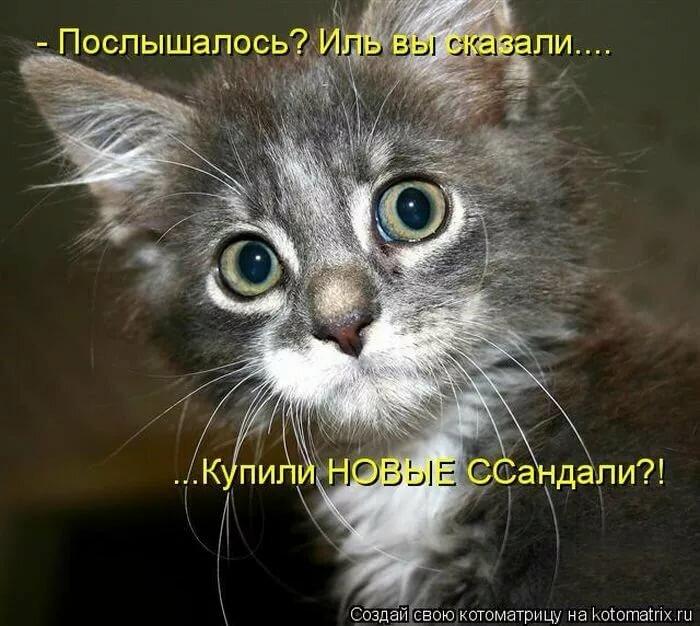 Приколы в картинках коты с надписями