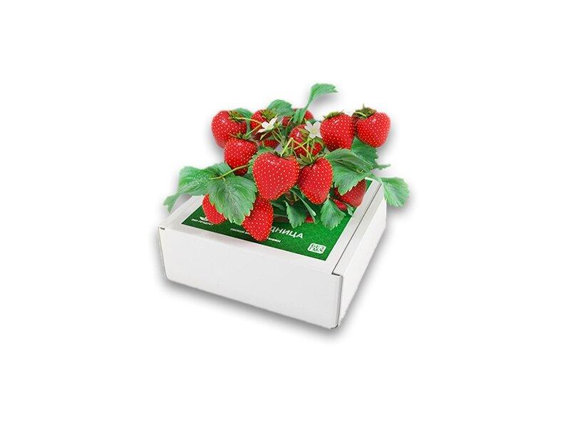 Домашняя ягодница в Нижнекамске