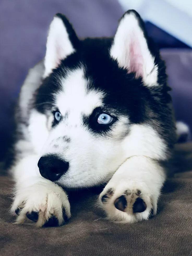 самые красивые собаки картинки на обои