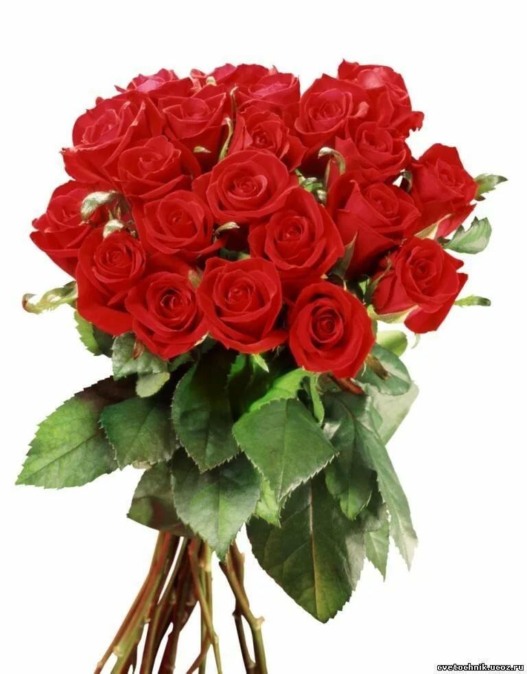 Открытки с днем рождения розы красные