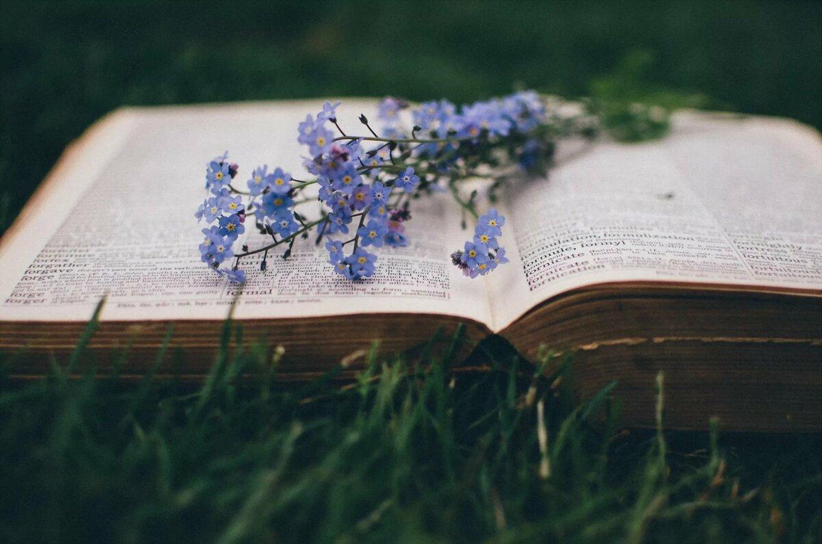 Книга и растение картинки