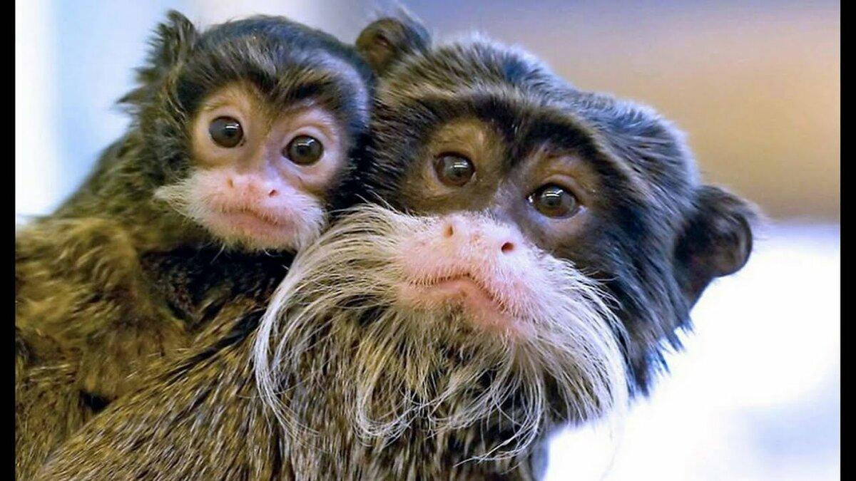 Картинки, картинки приколы про животных всех всех всех