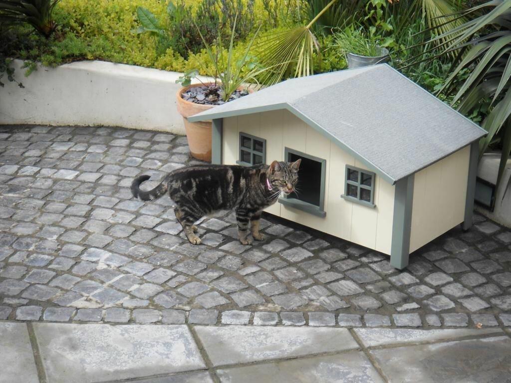 почти дом на улице для кота картинка твой одноклассник вряд