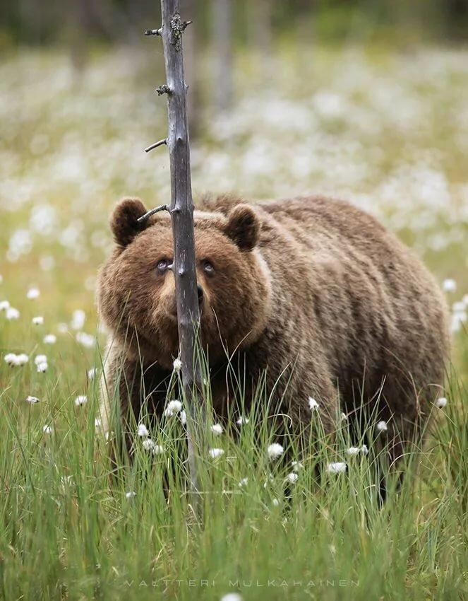фото медведь с мышкой реакции