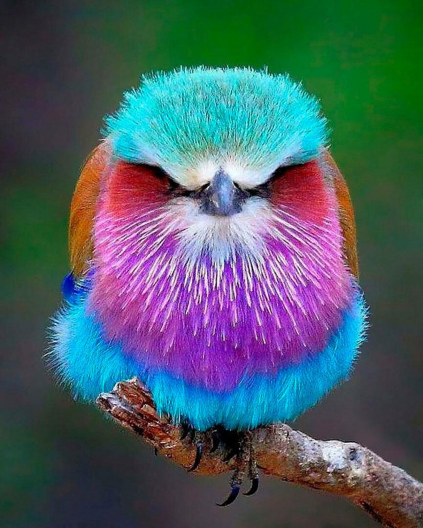 Удивительные птицы фото с названиями