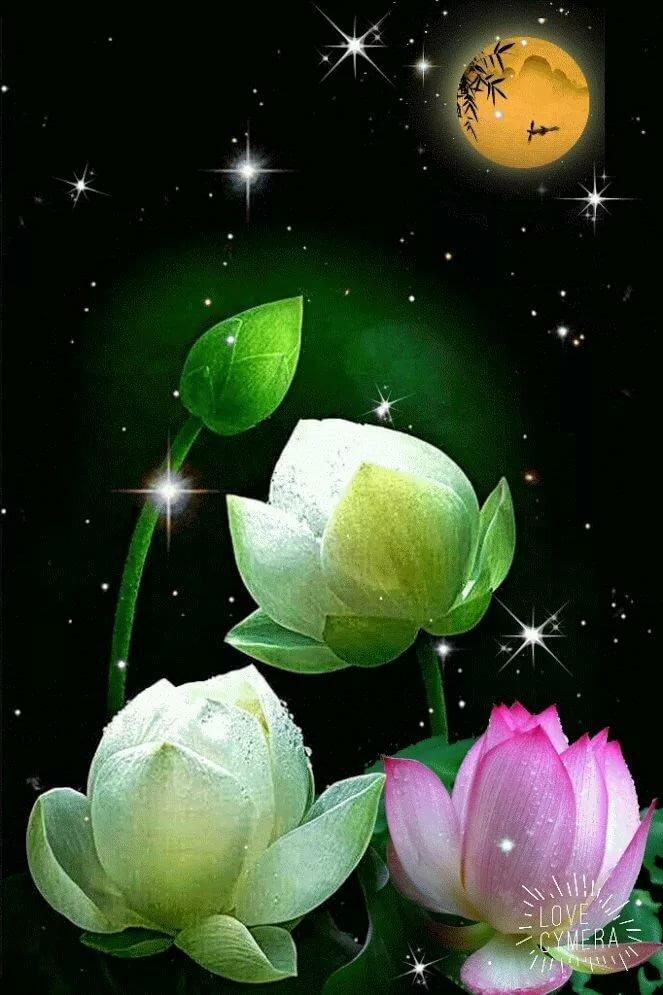 Анимационные открытки с цветами спокойной ночи