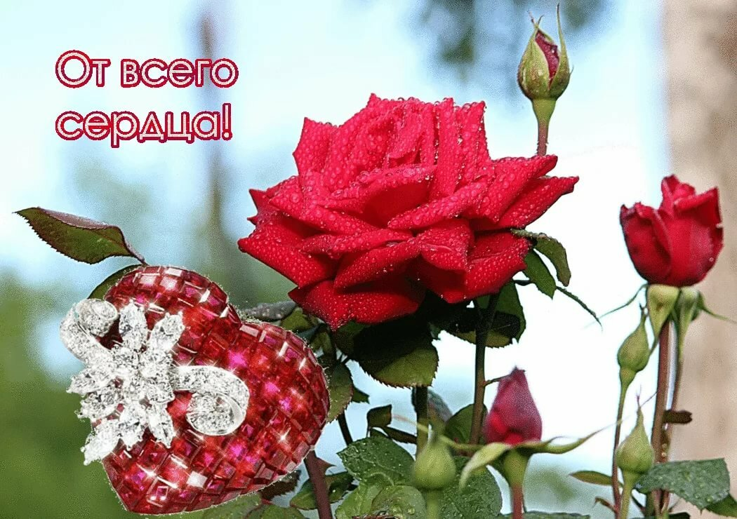 Картинки розы всем сердцем и душой