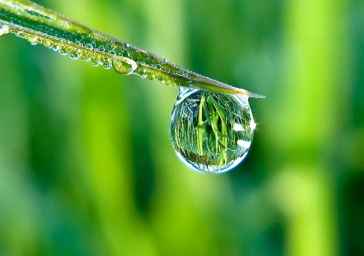 оформленная витрина красивые фото макросъемки воды живут