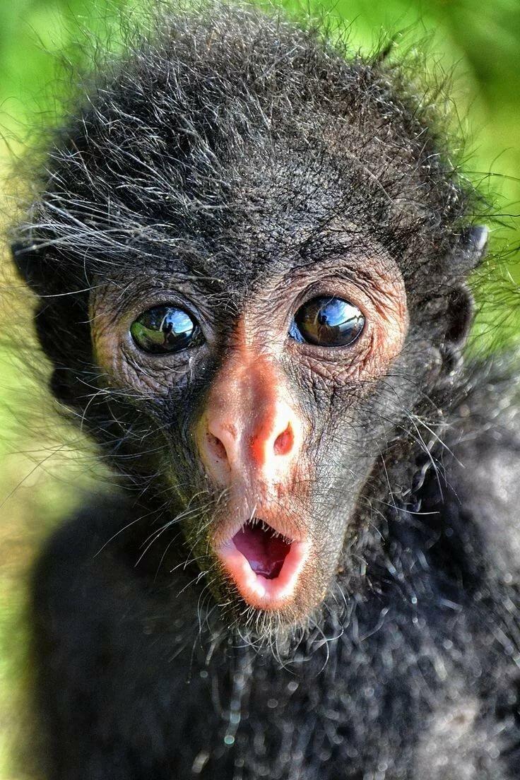 7лет, картинка обезьян прикольные