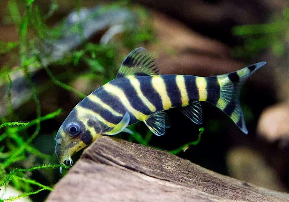 Виды рыб на ахтубе в картинках