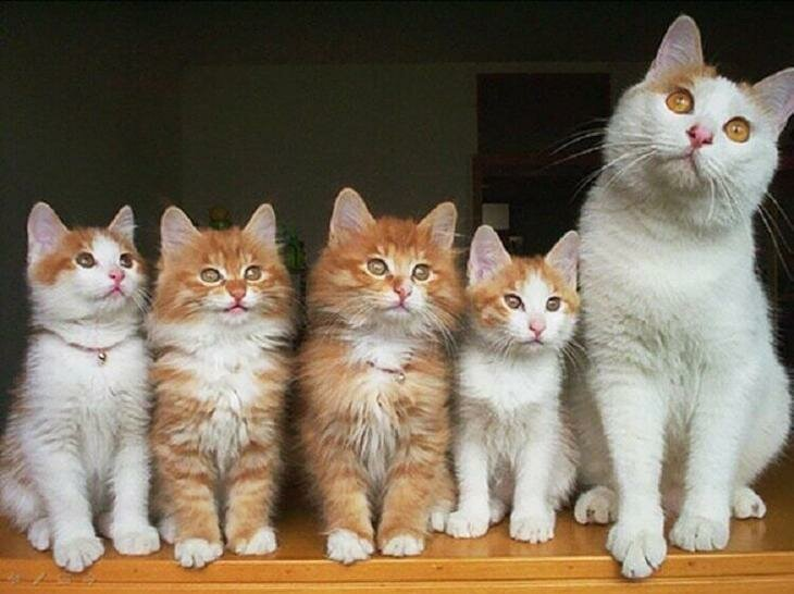 Иногда кошки кажутся безразличными к происходящему вокруг, но стоит им обзавестись потомством и все меняется.Замученные и уставшие они продолжают изо дня в день заботиться о своих маленьких детенышах...