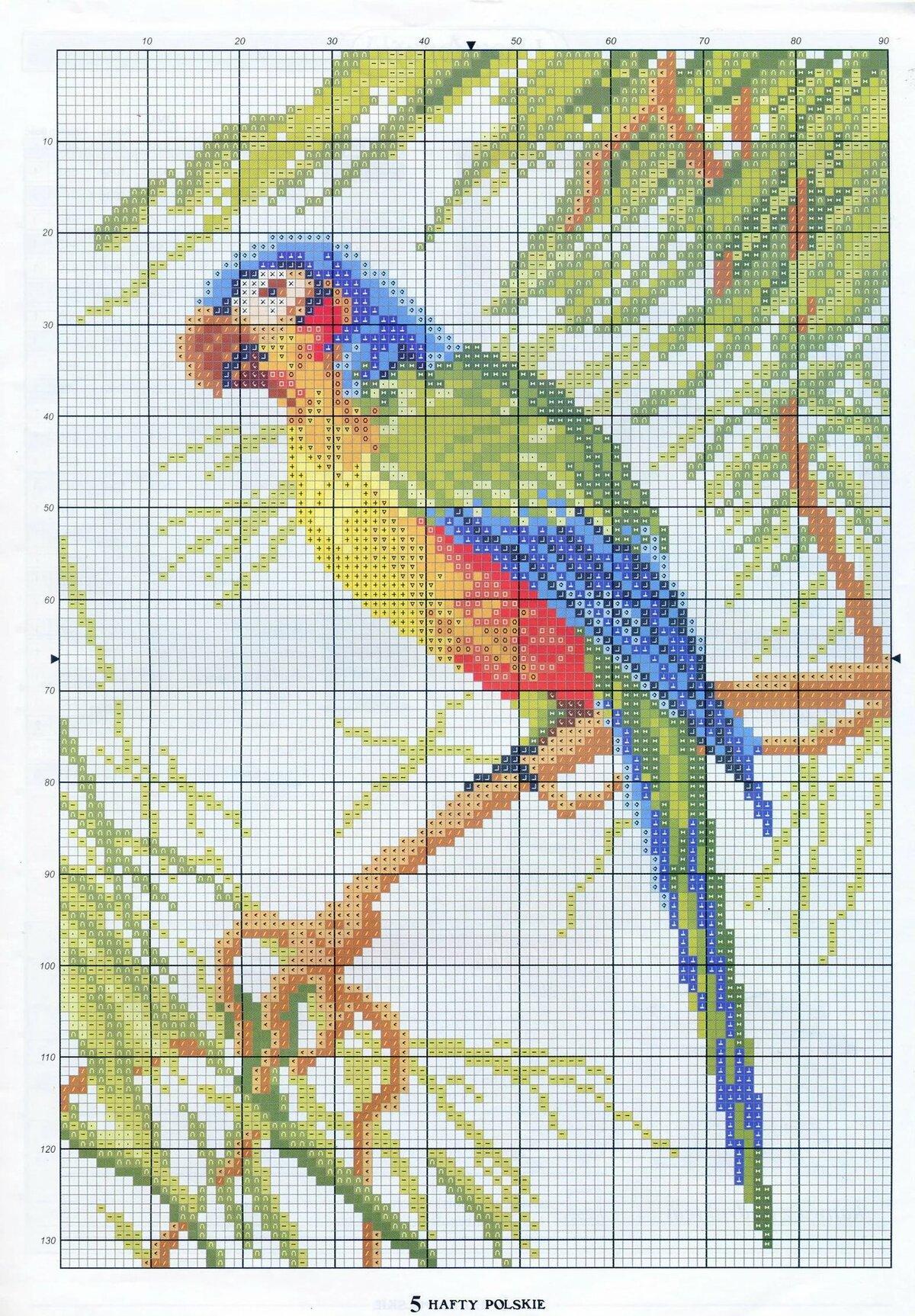 Картинки вышивок с попугаем