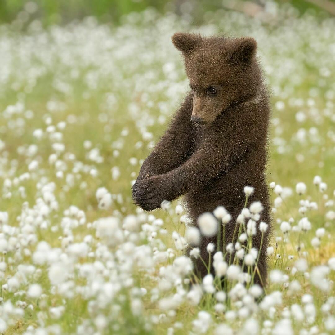 картинки стеснение животных мужские свитеры, широкий