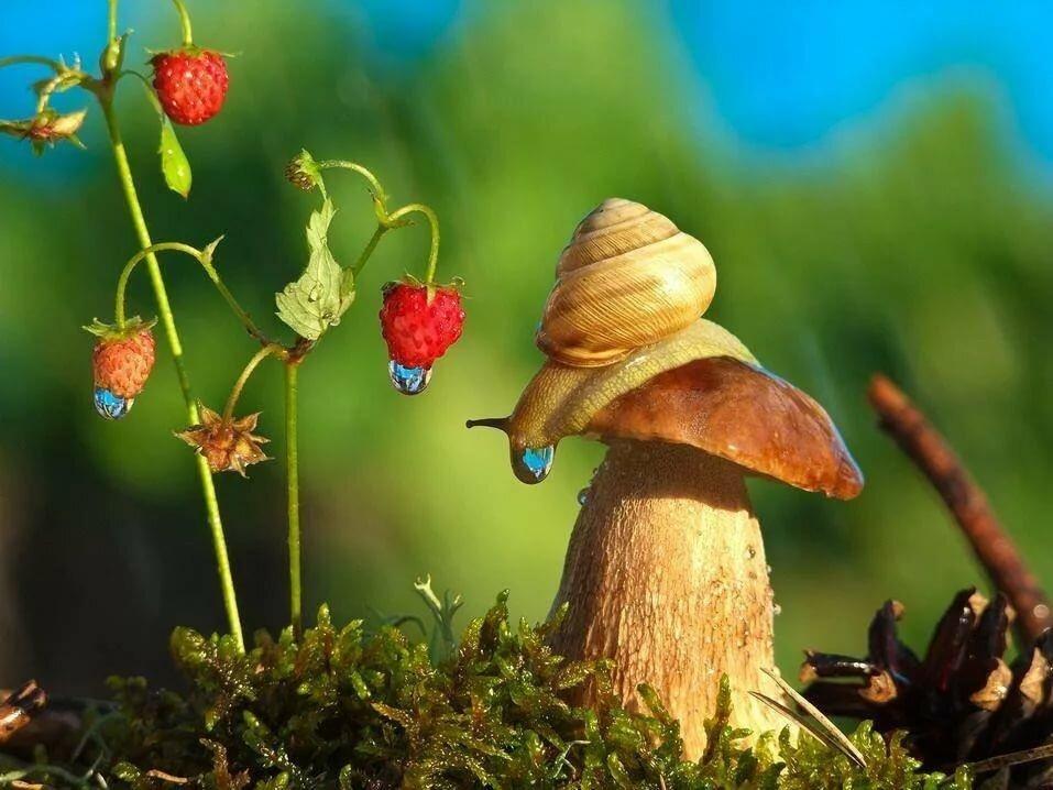 составе картинки живых грибов ученики могут