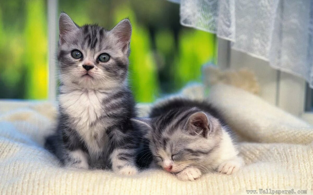 квартире покажи картинки маленьких котят врезной
