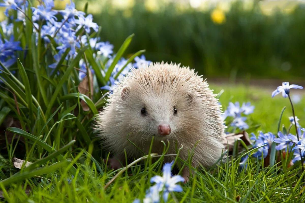 Смотреть картинки растений и животных