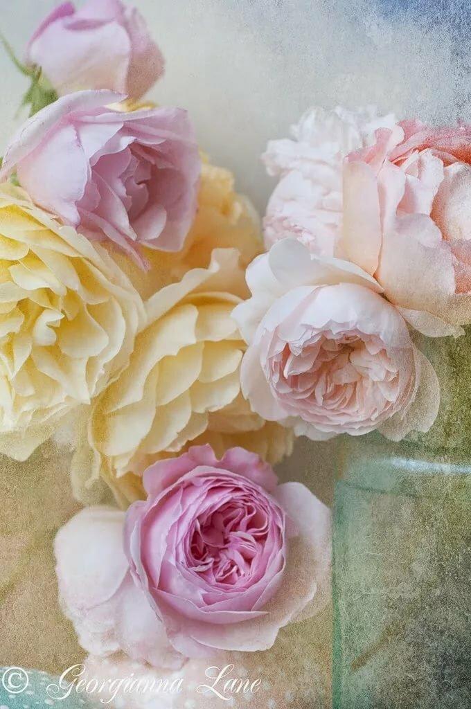 цветы в пастельных тонах картинки вертикальные