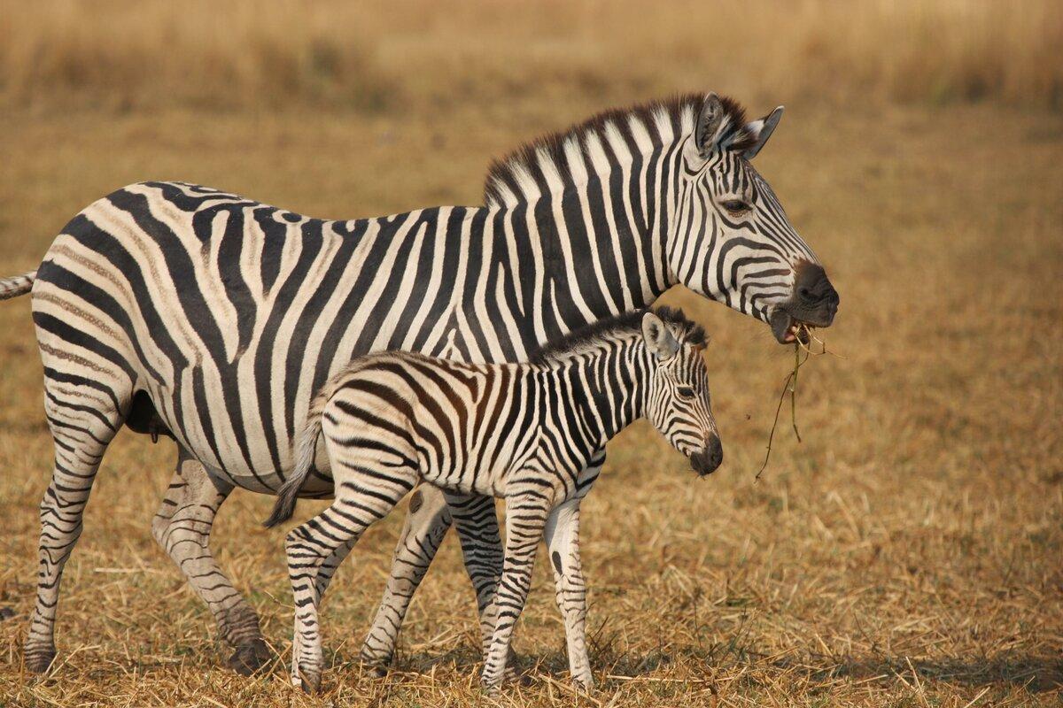 Животные африки картинки мелкие