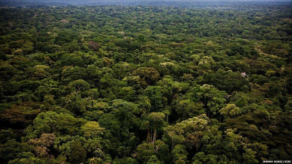 Картинки джунглей африки