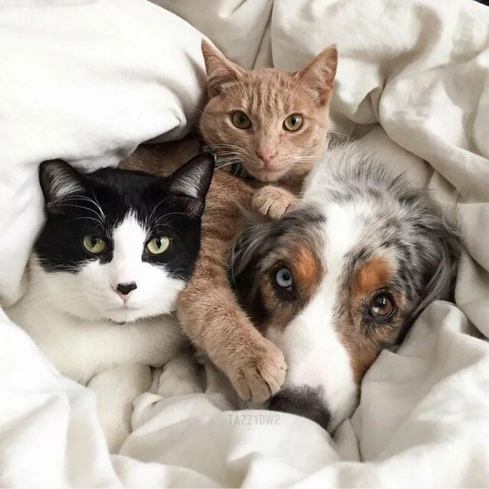 Прикольные фото и картинки кошек и собак