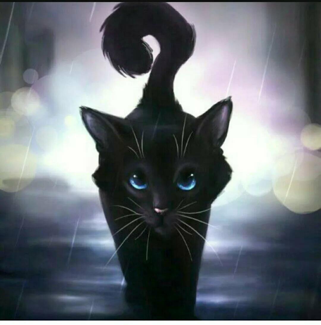Коты воители картинки красивые кошки ночью