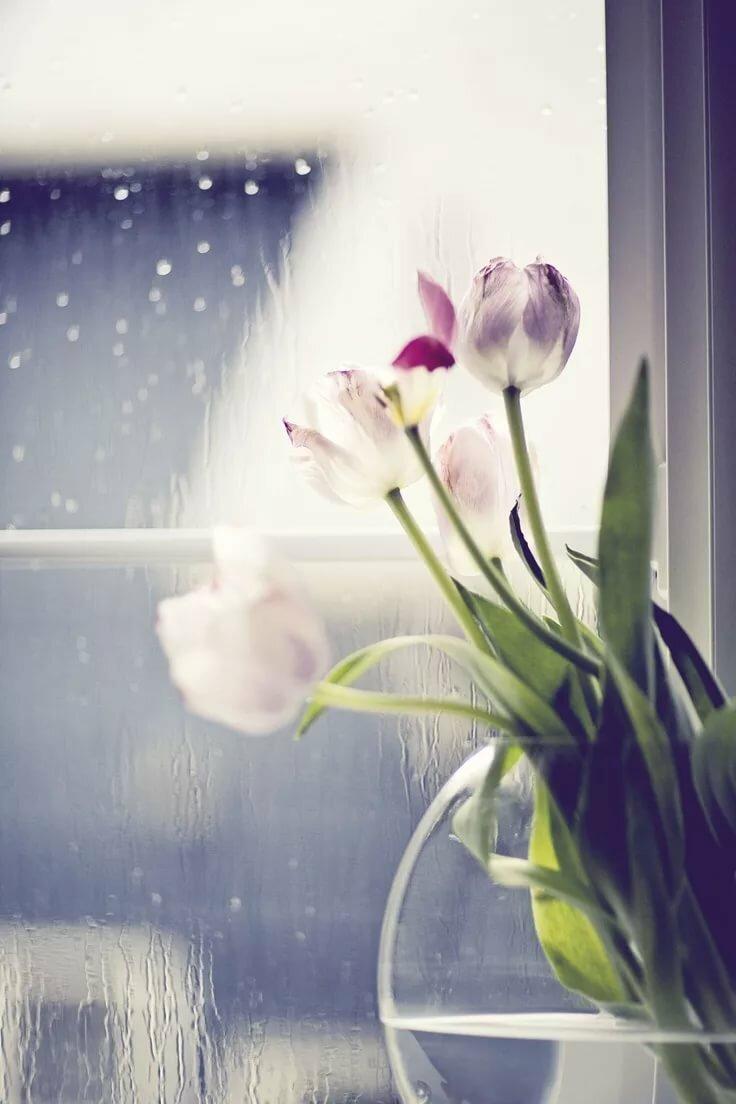 еще лучше дождливое весеннее утро фото тенденции