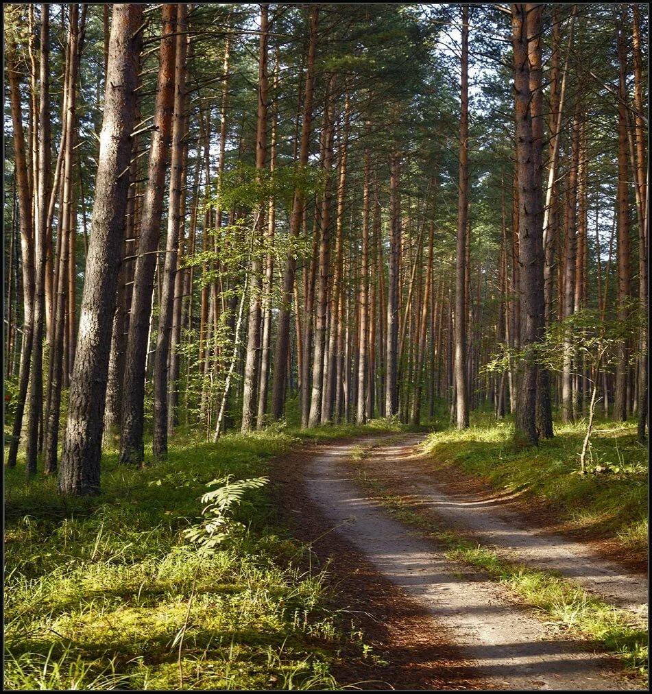 Картинка слово лес и человек прошлом