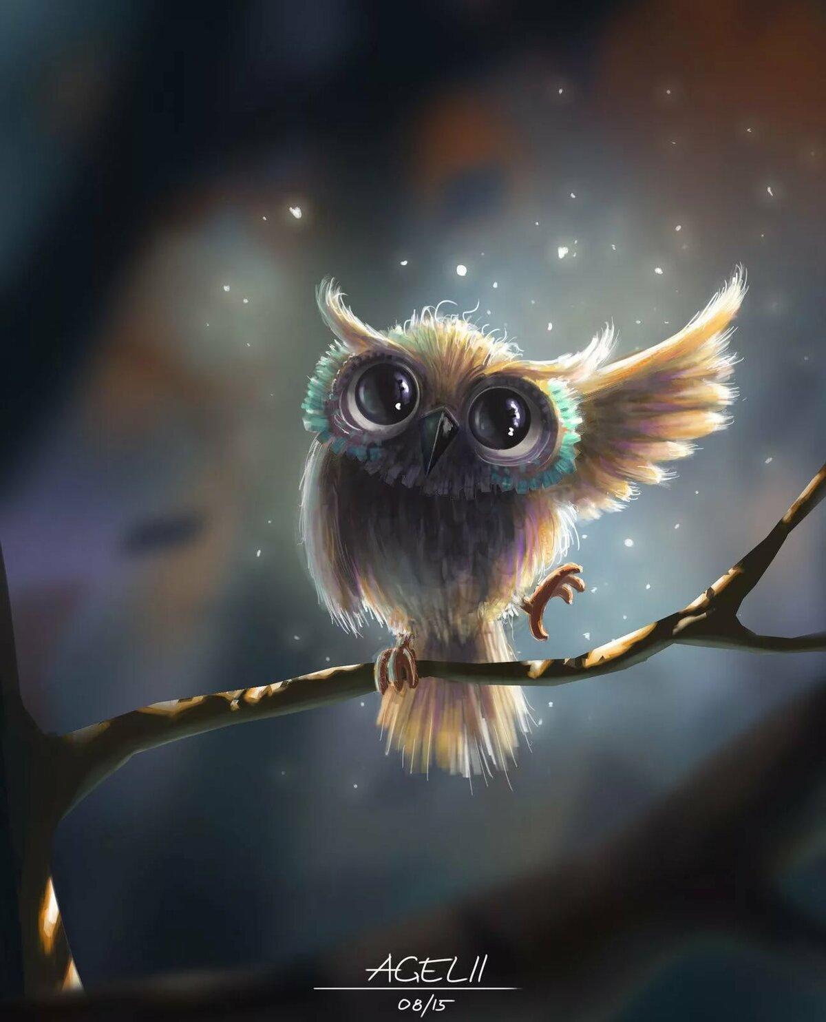 Красивые совы картинки смешные