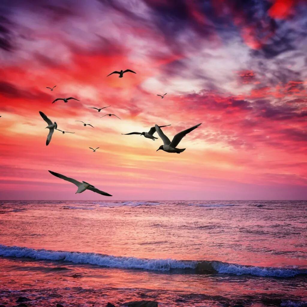 картинка с сердцем и чайкой ясную погоду