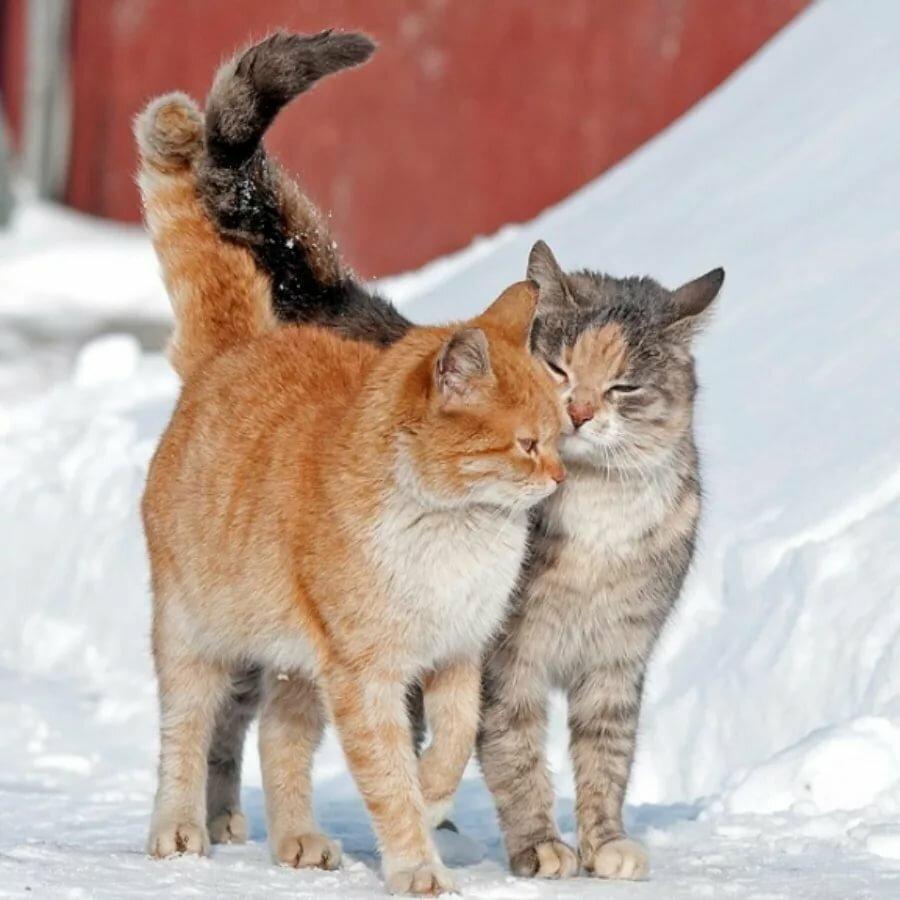 картинки про мартовских котов с юмором счастью, друга