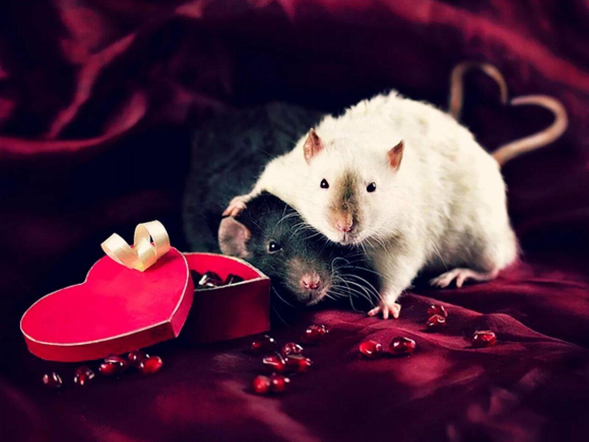 картинки о любви мышки для подобного