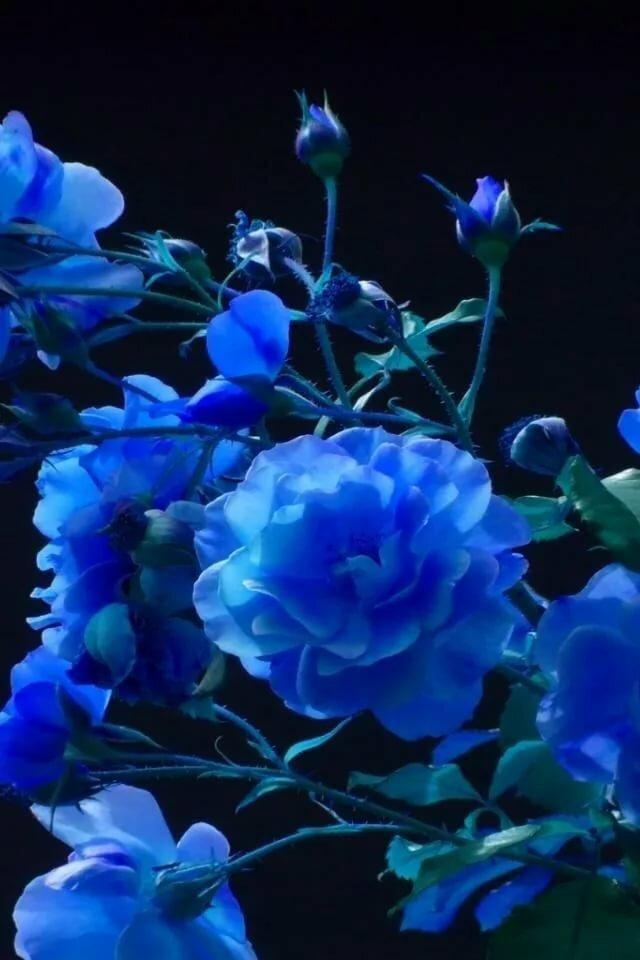 Картинки в синем цвете вертикальные