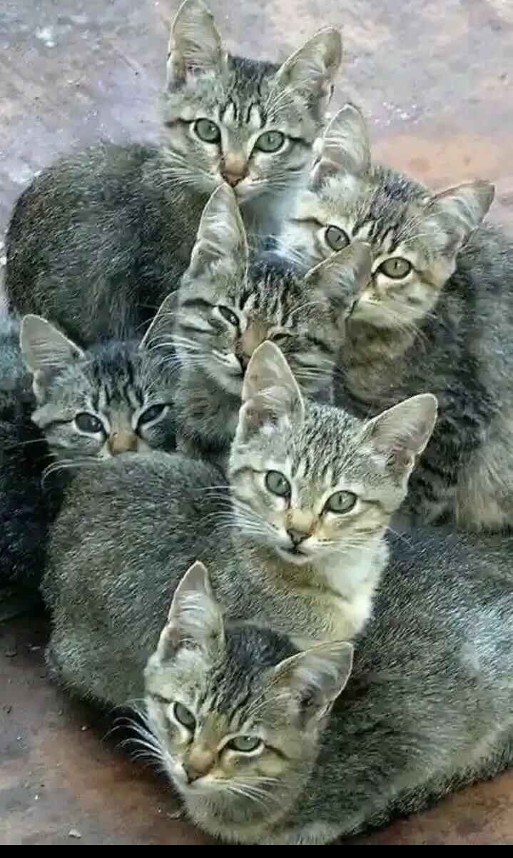 Nebile ayvaz adlı kullanıcının KEDİCİKLER panosundaki Pin Kediler ve yavruları, Cute kittens ve Evcil hayvanlar
