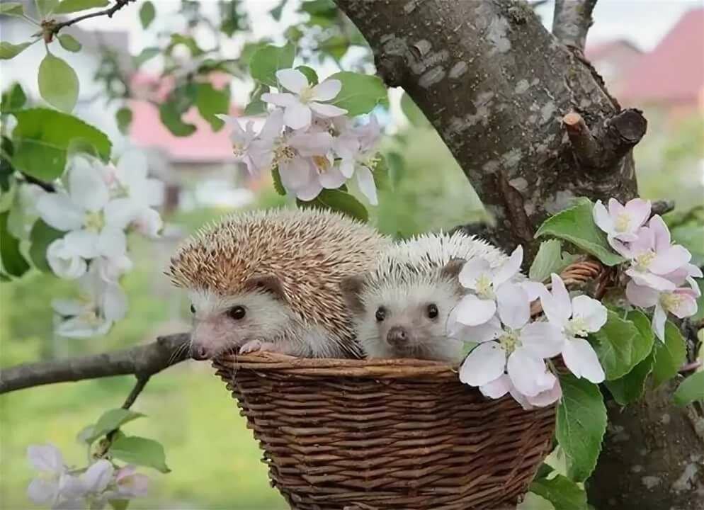 Ежик утро цветы картинки