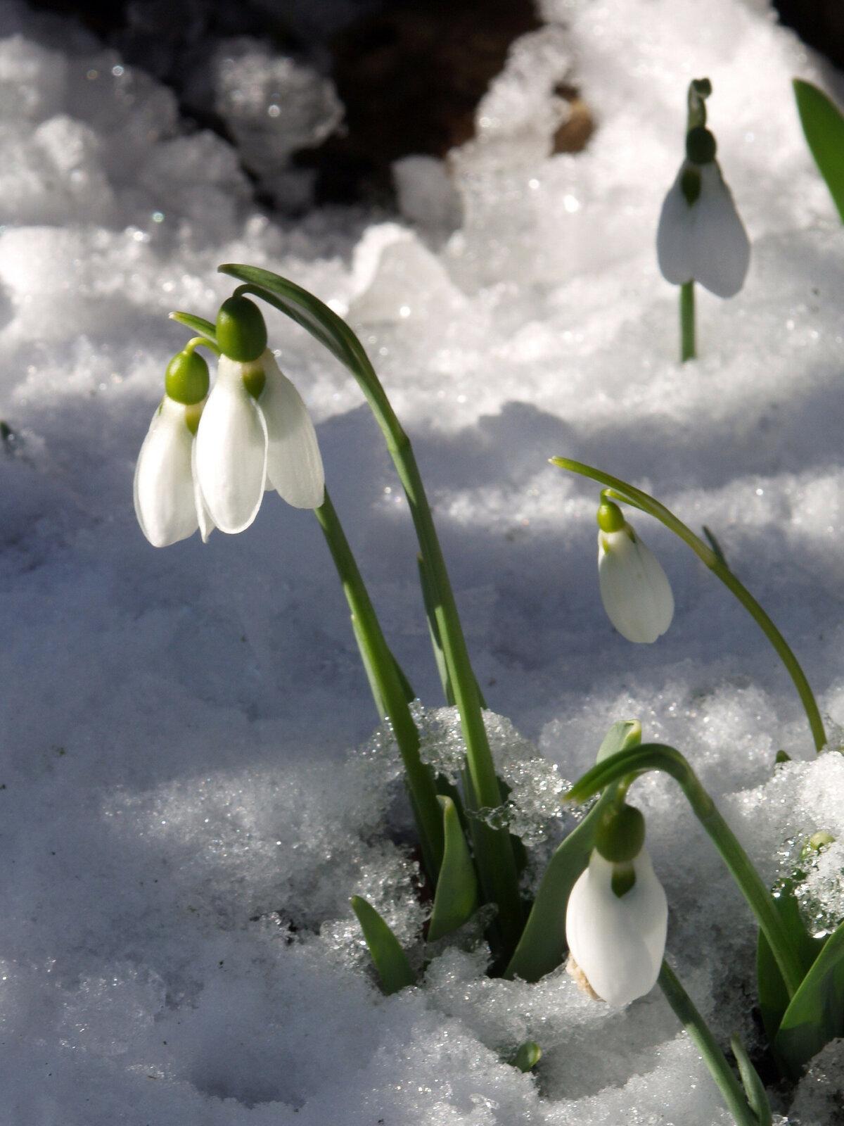 Картинки о начале весны красивые