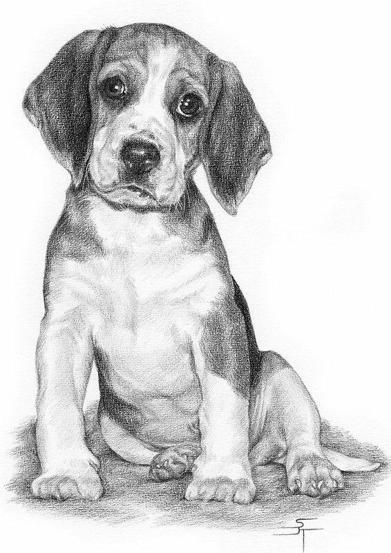 картинки собачки простым карандашом помощи
