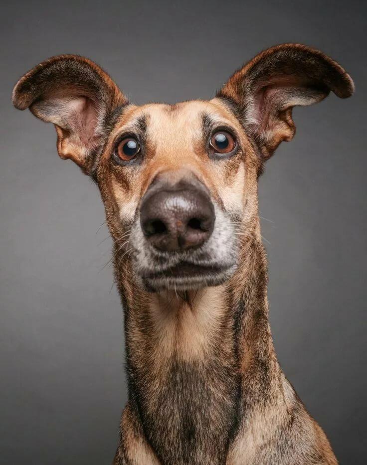 Прикольные фото собак, день святой
