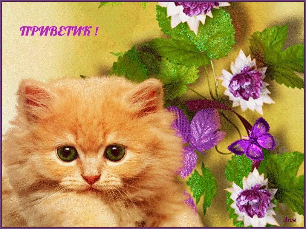 Открытки красивые доброго дня с котятами