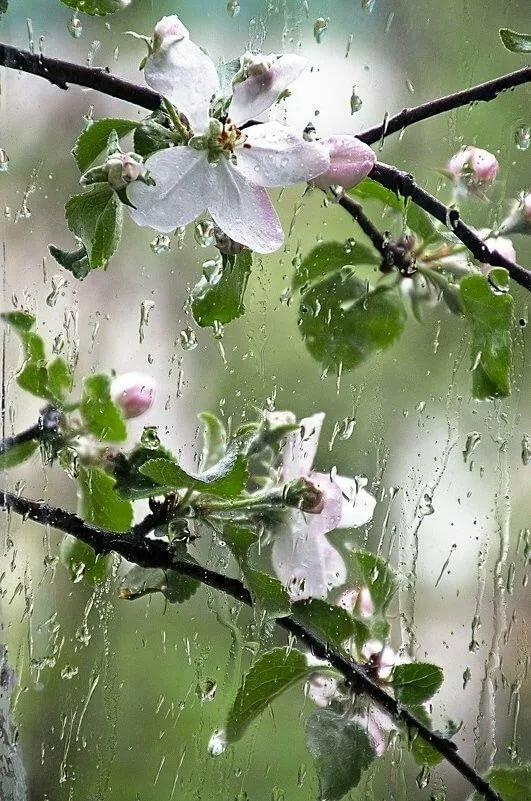 Весна дождь картинки доброе утро