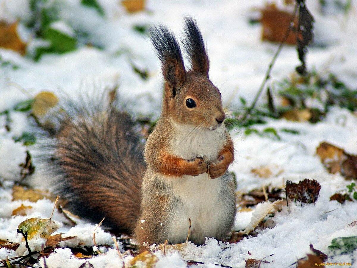 просмотрела картинки животных в зимнее время года цены, также