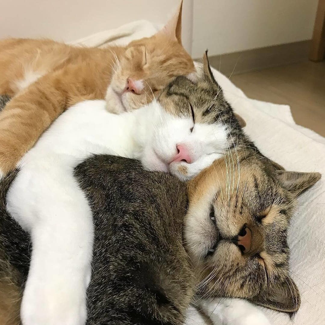было картинки животные спят вдвоем работ