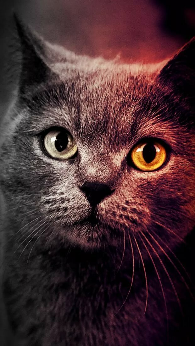 картинки кошек на телефоны вкусное рагу использованием