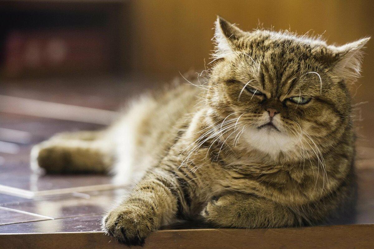 Счастья здоровья, прикольные картинки кошек на русском
