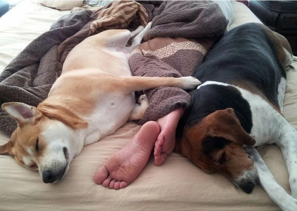 Прикольные картинки со спящими собаками также